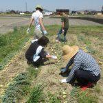 農作業2s
